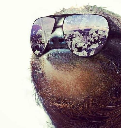 money sloth