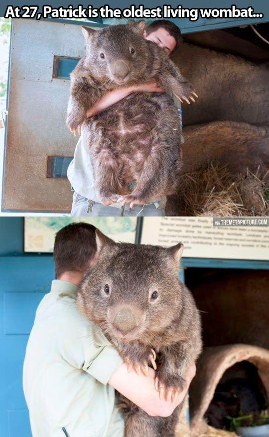 patrick the wombat