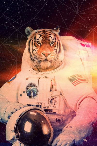 space tiger is best tiger